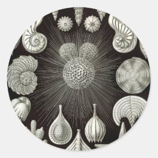 Pegatina Redonda Ernst Haeckel Thalamphora