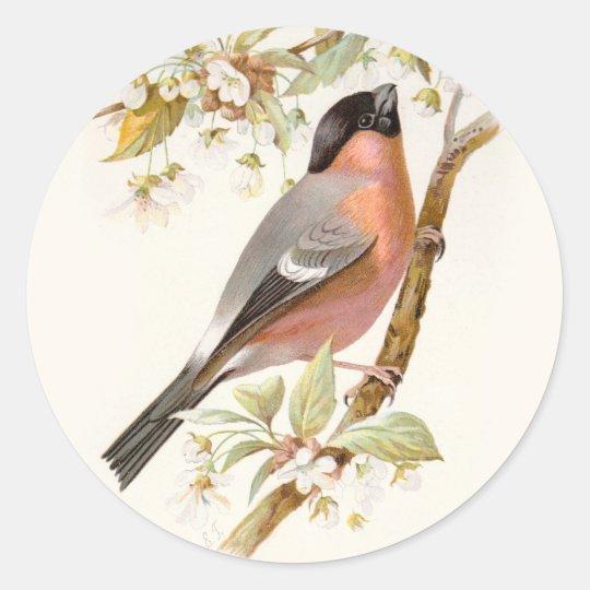 Pegatina Redonda Familiar Wild Birds Swaysland Great Bullfinch