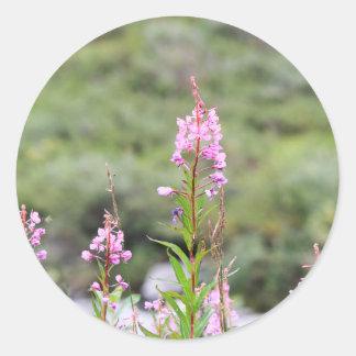 Pegatina Redonda Fireweed