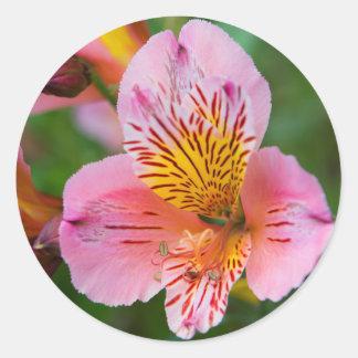 Pegatina Redonda Floraciones bonitas