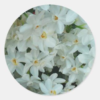 Pegatina Redonda Flores blancas delicadas del narciso de Paperwhite