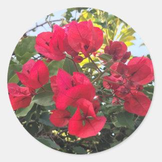 Pegatina Redonda Flores rojas del Bougainvillea