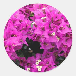 Pegatina Redonda Fondo fucsia púrpura del Bougainvillea
