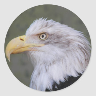 Pegatina Redonda Foto de Eagle calvo