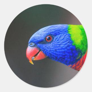 Pegatina Redonda Fresco-Arco iris-Lorikeet-silkenphotography