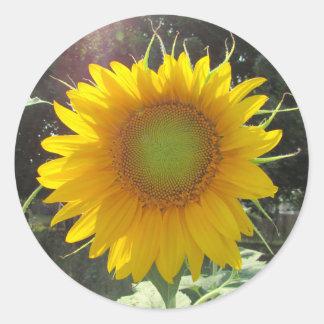 Pegatina Redonda Girasol amarillo soleado