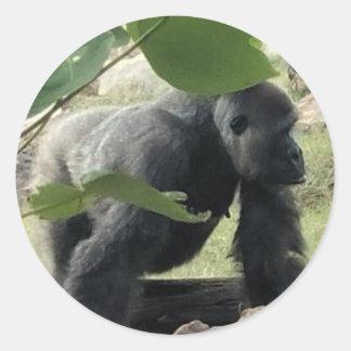 Pegatina Redonda Gorila del Silverback
