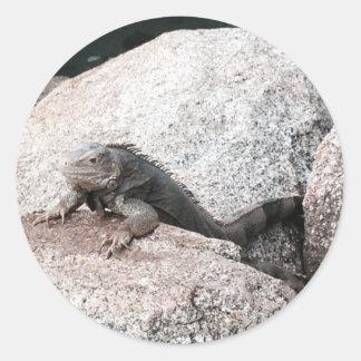 Pegatina Redonda Iguana salvaje