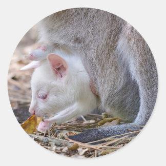 Pegatina Redonda Joey del albino en el bolsillo