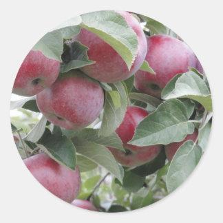 Pegatina Redonda manzanas
