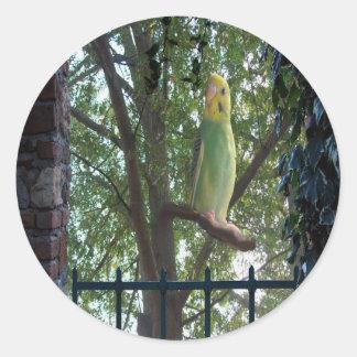 Pegatina Redonda Parakeet
