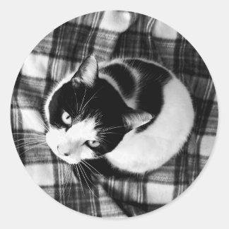 Pegatina Redonda Pegatinas blancos y negros del gato