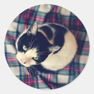 Pegatina Redonda Pegatinas de ojos verdes de la foto del gato