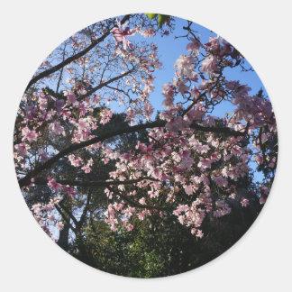 Pegatina Redonda Pegatinas del dawsoniana #2 de la magnolia