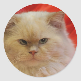 Pegatina Redonda pegatinas del gato