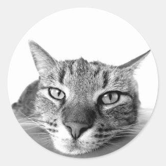 Pegatina Redonda Pegatinas perezosos del gato