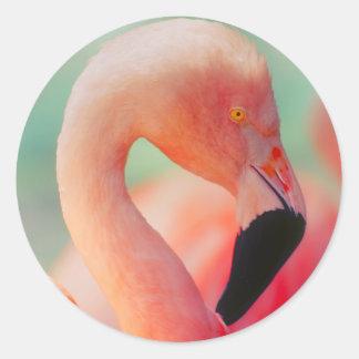 Pegatina Redonda Pegatinas rosados exóticos del pájaro del flamenco
