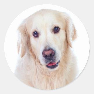 Pegatina Redonda Perro de perrito del golden retriever - hola amor