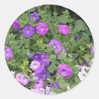 Pegatina Redonda Petunia púrpura del tema del jardín de la