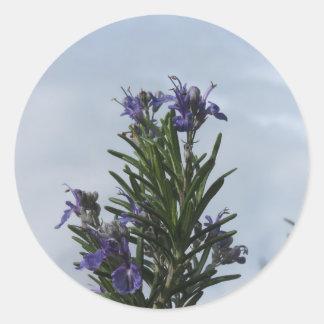 Pegatina Redonda Planta de Rosemary con las flores contra el cielo