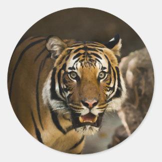 Pegatina Redonda Tigre siberiano