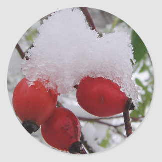 Pegatina Redonda Tres bayas del espino con nieves