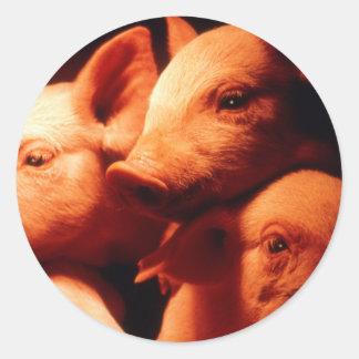 Pegatina Redonda Tres pequeños cerdos