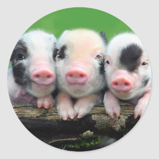 Pegatina Redonda Tres pequeños cerdos - cerdo lindo - tres cerdos