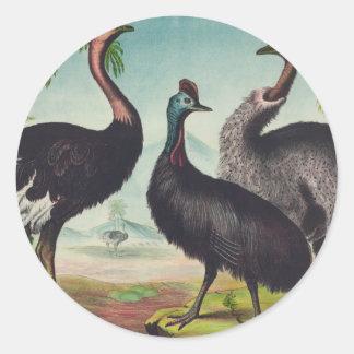 Pegatina Redonda Trío de avestruces
