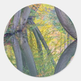 Pegatina Redonda Troncos de árbol de la caída con la reflexión en