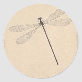 Pegatina Redonda Una libélula, por Nicolás Struyk, temprano décimo