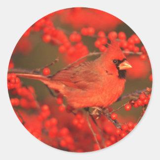 Pegatina Redonda Varón cardinal septentrional rojo, IL