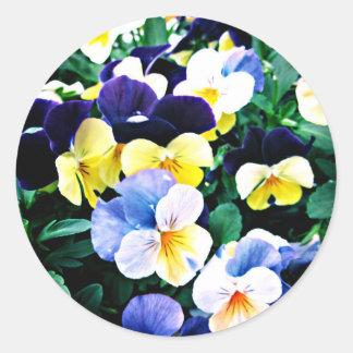 Pegatina Redonda Viola preciosa