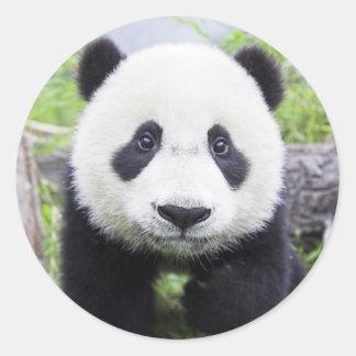 Pegatina redondo clásico, oso de panda brillante pegatina redonda