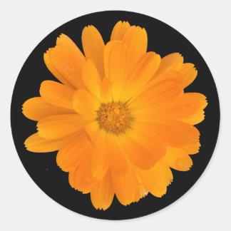 Pegatina redondo de la flor anaranjada vibrante de