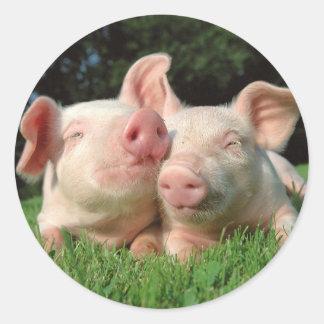Pegatina redondo de los cerdos