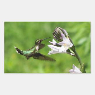 Pegatina Rubí-Throated del rectángulo del colibrí