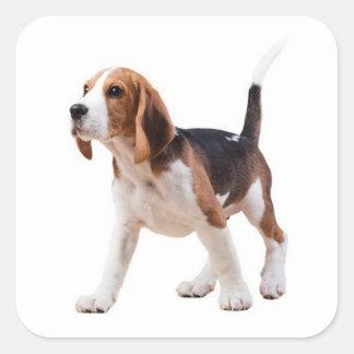 Pegatina/sello del perro de perrito del beagle del