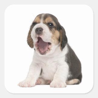 Pegatina/sello del perro de perrito del beagle del pegatina cuadrada