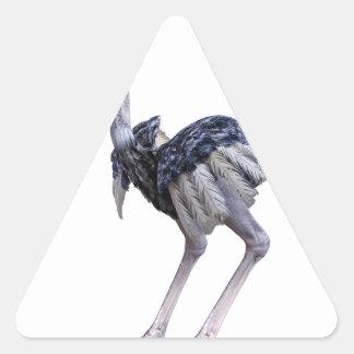 Pegatina Triangular Avestruz