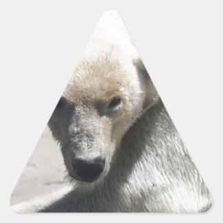 Pegatina Triangular Cerveza polar