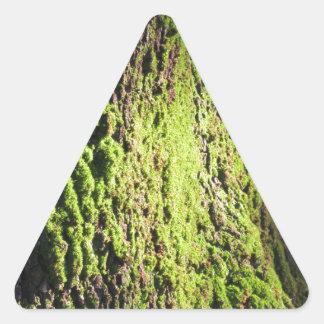 Pegatina Triangular El musgo verde en el detalle de la naturaleza del