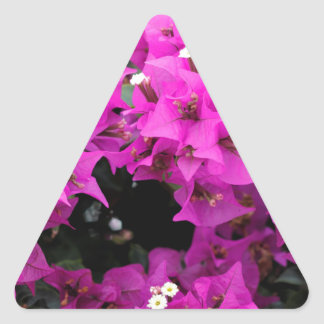 Pegatina Triangular Fondo fucsia púrpura del Bougainvillea