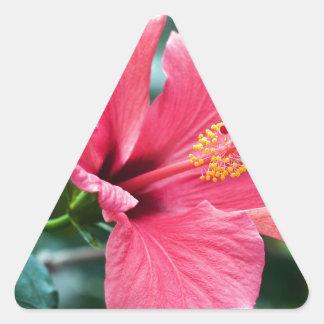 PEGATINA TRIANGULAR HABLA HIBISCUS FLOWER