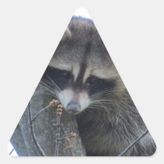 Pegatina Triangular Mapache