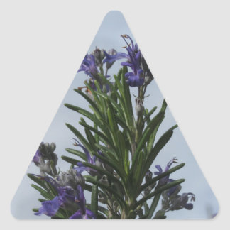 Pegatina Triangular Planta de Rosemary con las flores contra el cielo