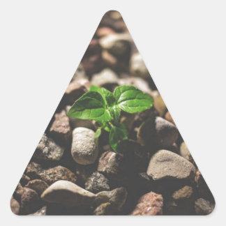Pegatina Triangular Planta frondosa verde que comienza a crecer en los