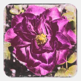 Pegatina único y elegante color de rosa púrpura