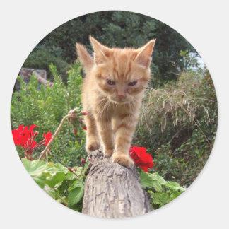 Pegatinas anaranjados lindos del gatito pegatina redonda