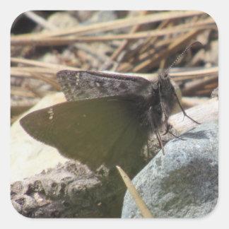 Pegatinas de la mariposa pegatina cuadrada
